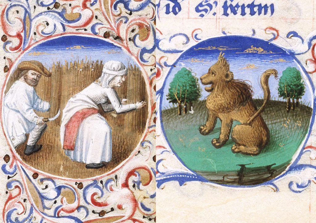 Getreideernte mit der Handsichel und der Löwe als Symbol des Sternbilds. 15. Jahrhundert.